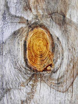 Photograph - Tree Ring Abstract 2 by Sarah Loft