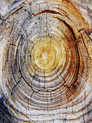 Photograph - Tree Ring Abstract 4 by Sarah Loft
