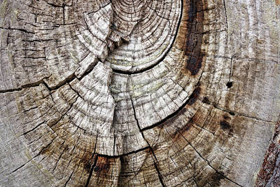 Photograph - Tree Rings - Photography by Ann Powell