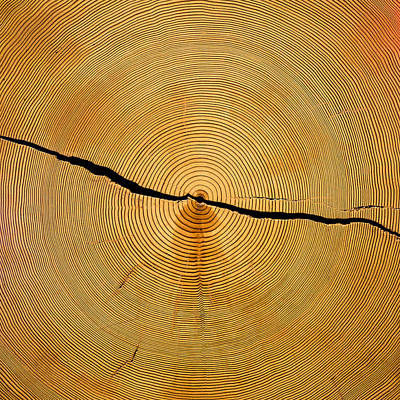 Photograph - Tree Rings by Steven Ralser