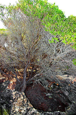 Photograph - Tree Rock And Life by Miroslava Jurcik
