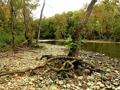 Wall Art - Photograph - Tree Roots Along The Scioto by Robert Papps