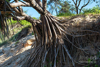 Photograph - Tree Roots by Andrew Michael
