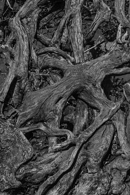 Tree Roots Photograph - Tree Roots Black And White by Garry Gay