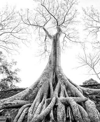 Tree Roots Cambodia Angkor Wat Art Print by Cory Dewald