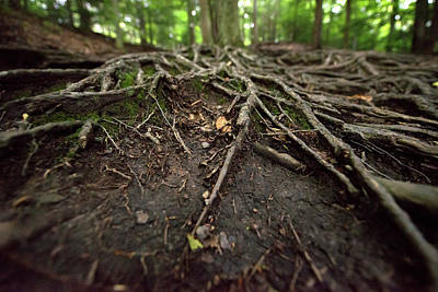 Photograph - Tree Roots by Colin Gordon