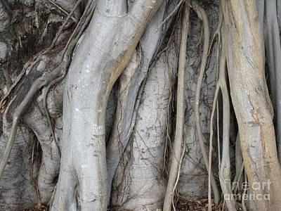 Photograph - Tree Roots by Glenda Zuckerman
