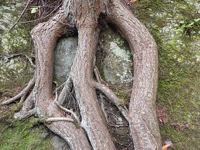 Photograph - Tree Roots by John Parry