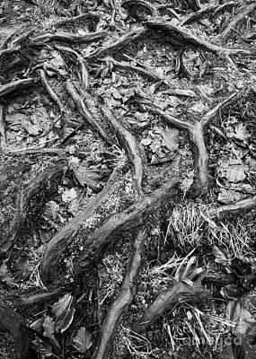 Aira Force Wall Art - Photograph - Tree Roots Study by Tony Higginson