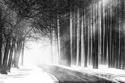 Photograph - Tree Row by Emmanuel Panagiotakis