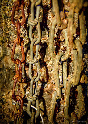 Photograph - Tree Sap And Chains by LeeAnn McLaneGoetz McLaneGoetzStudioLLCcom
