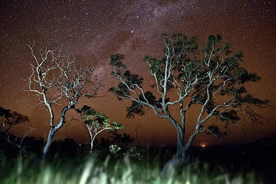 Tree Savanna Stars Sky Serrania De Chiquitos Bolivia Art Print by Dirk Ercken
