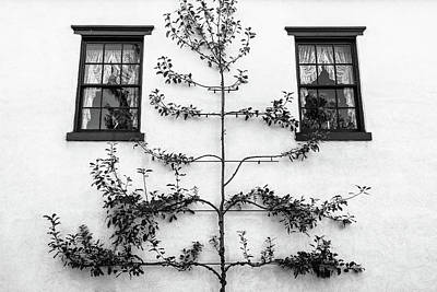 Photograph - Tree Sculpture by Glenn DiPaola