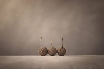 Still Life Photograph - Tree Seed Pods by Scott Norris
