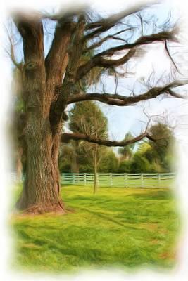 Photograph - Tree Series 1323 by Carlos Diaz