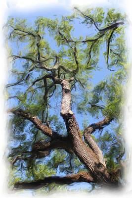 Photograph - Tree Series 2257 by Carlos Diaz