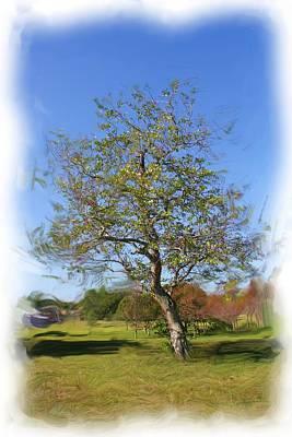 Photograph - Tree Series 2303 by Carlos Diaz