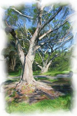Photograph - Tree Series 2318 by Carlos Diaz