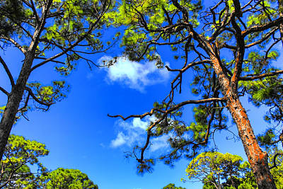 Photograph - Tree Series 45 by Carlos Diaz