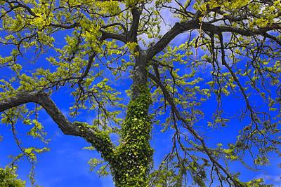 Photograph - Tree Series 66 by Carlos Diaz