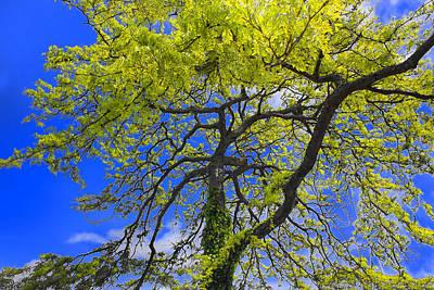 Photograph - Tree Series 67 by Carlos Diaz