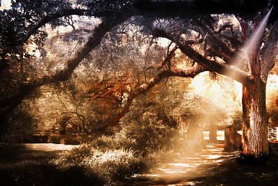 Photograph - Tree Series 68 by Carlos Diaz