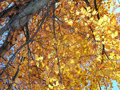 Photograph - Tree And Yellow Leaves Series 71 by Carlos Diaz