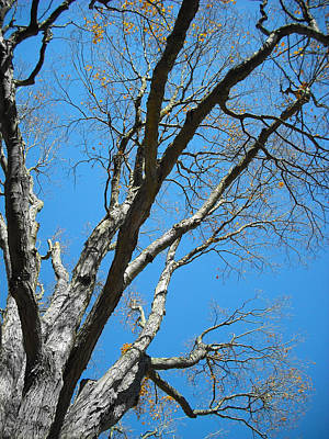 Photograph - Tree And Sky Series 72 by Carlos Diaz