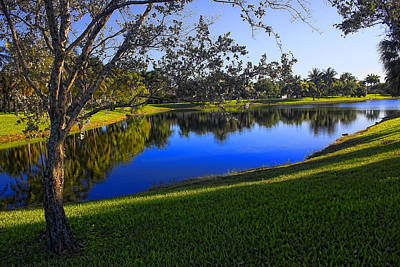 Photograph - Park Vista 76 - Tree Series 76  by Carlos Diaz