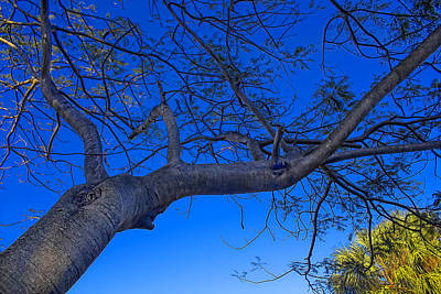 Photograph - Tree And Sky 78 - Tree Series 78 by Carlos Diaz