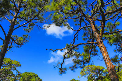 Photograph - Trees And Sky - Tree Series 86 by Carlos Diaz