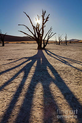 Tree Shadow Art Print by Inge Johnsson