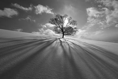 Frost Photograph - Tree Shadow by Kengo Shibutani