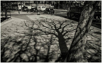 Photograph - Tree Shadow by Stewart Marsden
