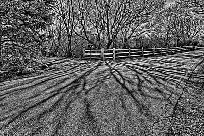 Photograph - Tree Shadows by Lilia D