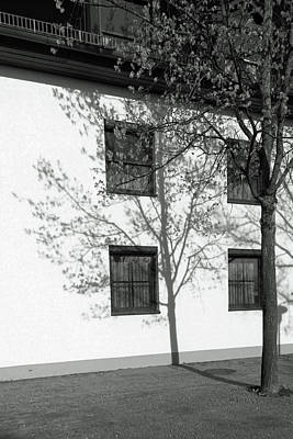 Tree Photograph - Tree Shadows, Munich by Brooke T Ryan