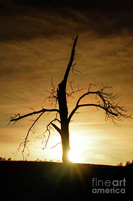 Photograph - Tree Silhouette At Sundown by Bill Gabbert