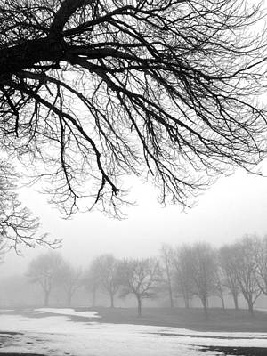 Photograph - Tree Silhouette In Fog by Polly Castor