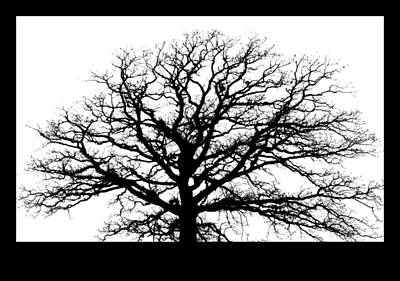 Inspirational Photograph - Tree Silhouette by Inspired Arts