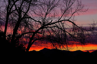 Photograph - Tree Silhouette by Paul Marto