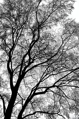 Photograph - Tree Silhouette Series 1 by Karen Stahlros