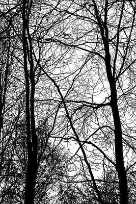 Photograph - Tree Silhouette Series 3 by Karen Stahlros