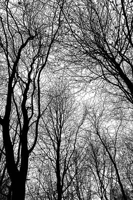 Photograph - Tree Silhouette Series 6 by Karen Stahlros