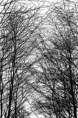 Photograph - Tree Silhouette Series 8 by Karen Stahlros