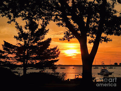 New England Photograph - Tree Silhouette Sunrise  by Janice Drew