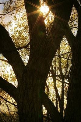 Photograph - Tree Silhouette With Sunburst by Tatiana Travelways