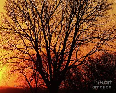 Photograph - Tree Silhouette by Yumi Johnson