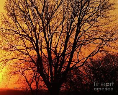 Photograph - Tree Silhouette by Yumi Johnson