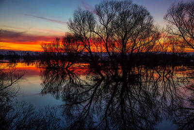 Photograph - Tree Silhouettes At Sunset by Garry Gay