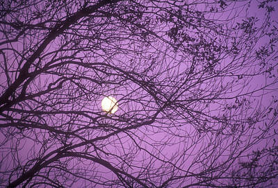 Tree Silhouettes With Rising Moon In Cades Cove, Great Smoky Mountains National Park, Tennessee, Usa Art Print